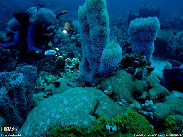 Plongée sous marine visite des récifs sous marin Dominique