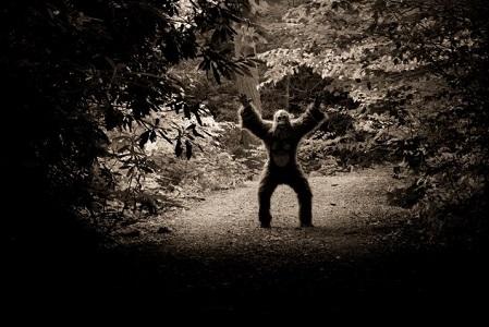 Gizemli Ormanların Açıklanamayan Gizemleri (Olayları)