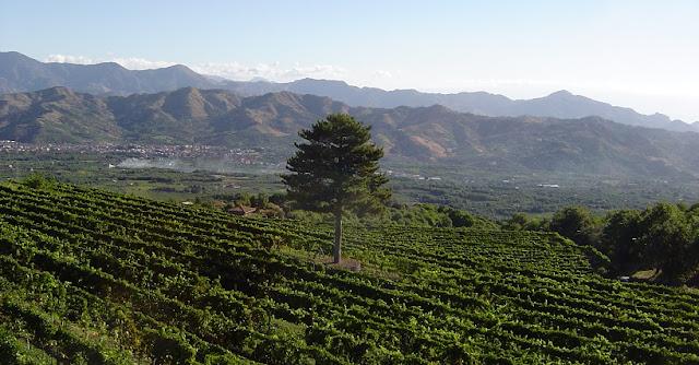 Vinícola Gambino Winery