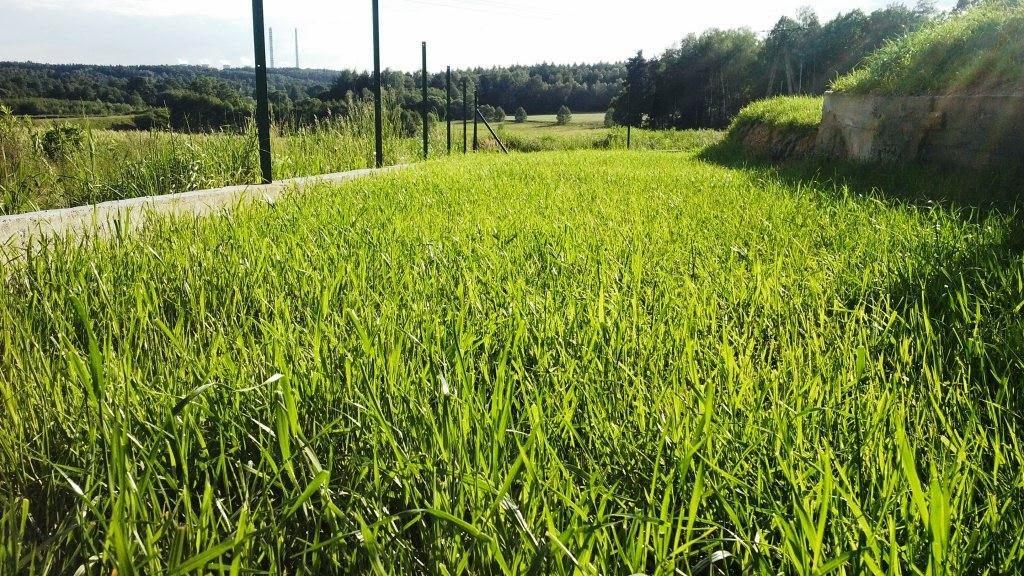 Mój trawnik bez chwastów