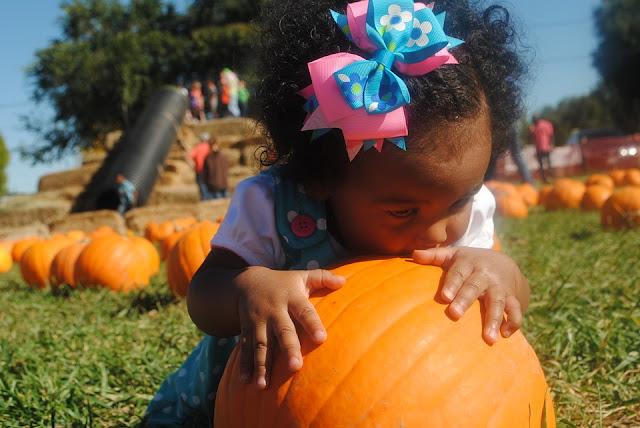 Image: Pumpkin Patch Baby, by Jazmin Sambula on Pixabay