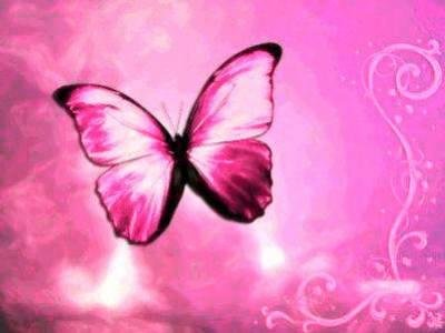 Pink butterfly pictures |Funny Animal