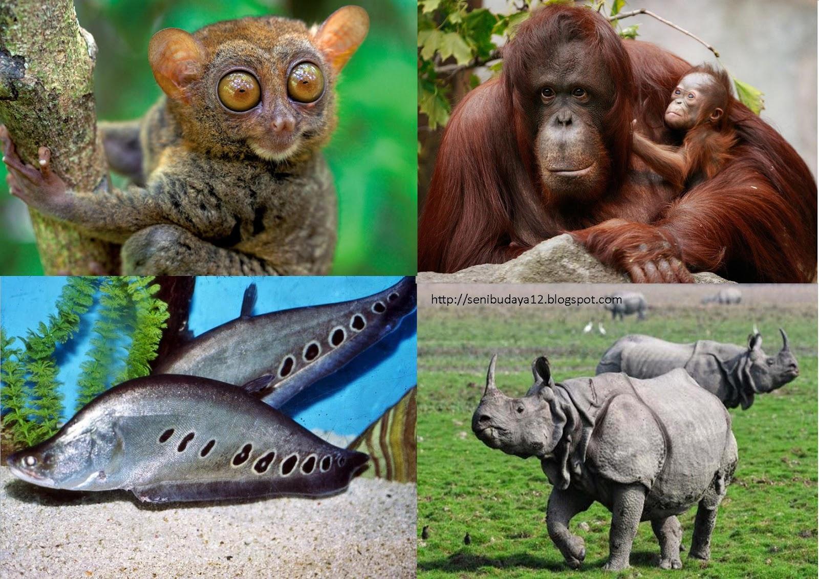 14++ Gambar hewan yg hampir punah terbaru