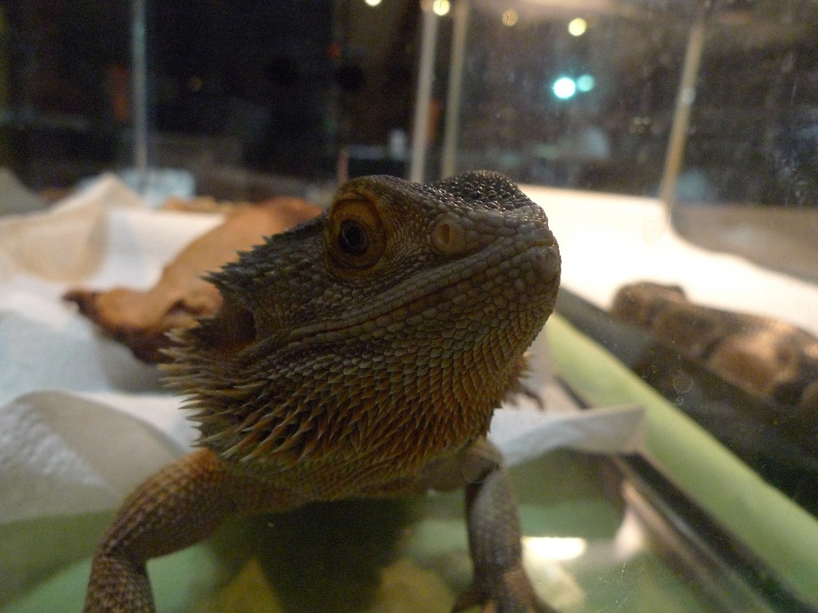 Paraherpetology: Repticon Dallas, Part 5: DFW Reptile Rescue