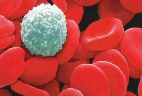 Pengertian Dan Fungsi Sel Darah Merah (Eritrosit), Sel Darah Putih (Leukosit), Dan Keping Darah (Trombosit)