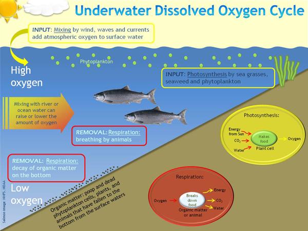 Dalam pembuatan energi dari bahan anorganik menjadi bahan organik itu ternyata tidak selalu menggunakan energi matahari. Kandungan Oksigen Terlarut / DO (Disslove Oxygen) - Agustyar