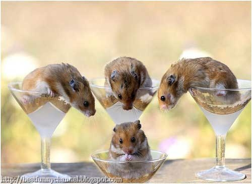 Four funny hamsters.