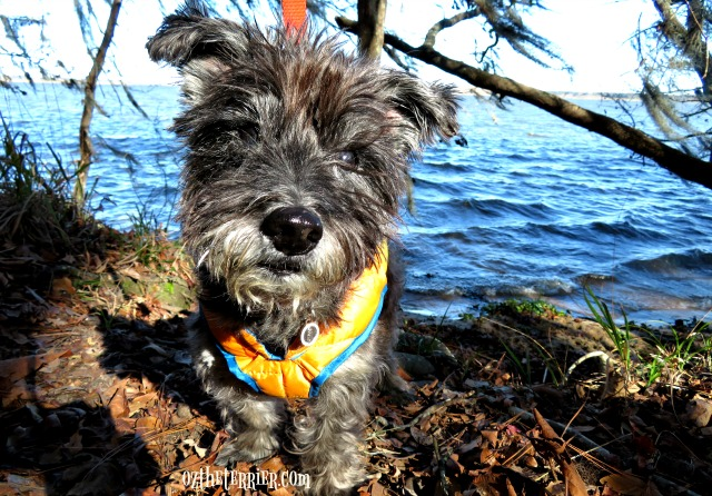 oz first outdoor adventure of 2017 to Three Rivers State Park