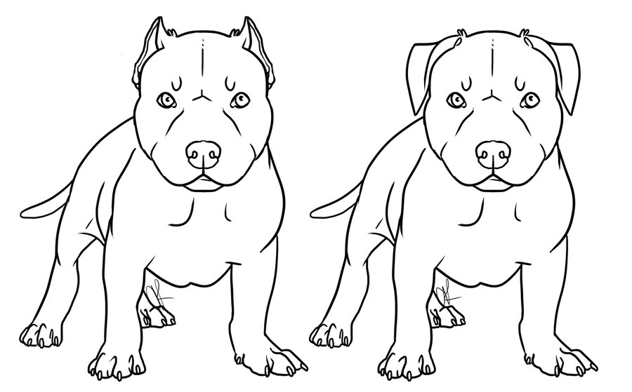 Kleurplaten Dieren Honden Kleurplaten Pitbull Puppies Stafford