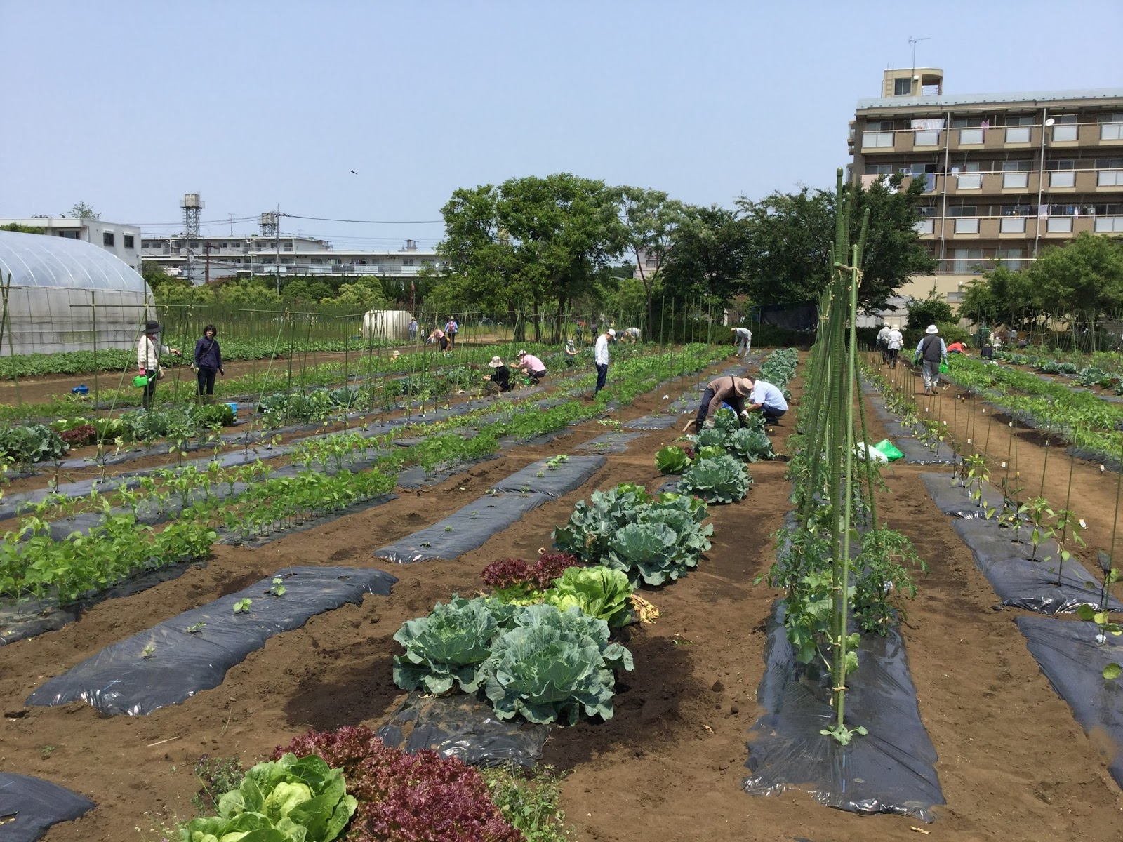 Japan Farmers Markets Experience Farms And Community Gardens How To Get Gardening In Japan