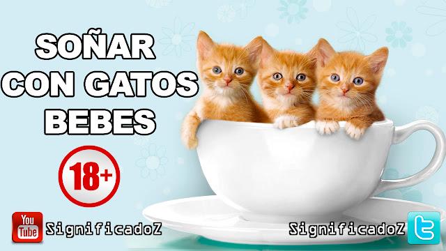 Soñar con Gatos Bebes ¿Que Significa?