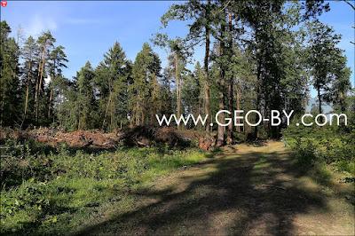 Вырубка в лесу рядом с деревней Колодезное
