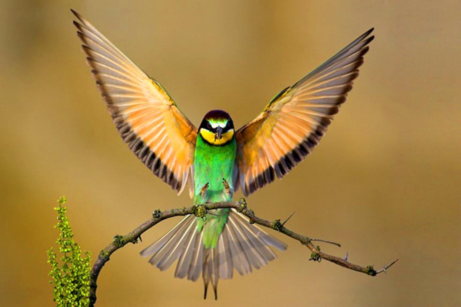 Birds HD Wallpapers - wallpaper202
