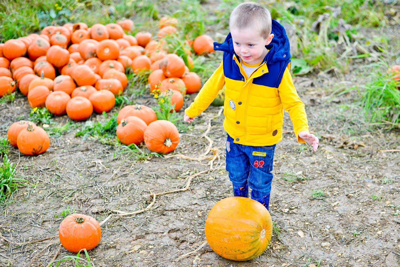 pick your own pumpkin patch, pop up farm st albans, pop up farm pumpkins st albans, pumpkin picking, pumpkin patch,