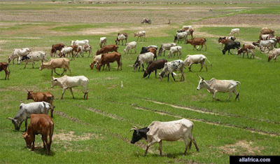 Enact Anti Grazing Bill Now, Group Tells Ebonyi House Assembly
