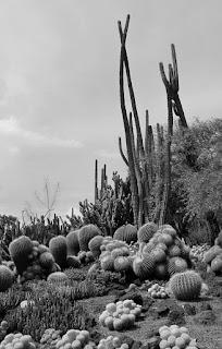 desert garden photo by keagiles