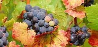 7 Mitos do Vinho