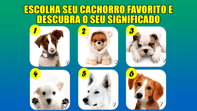 O que seu cachorro favorito releva sobre você?