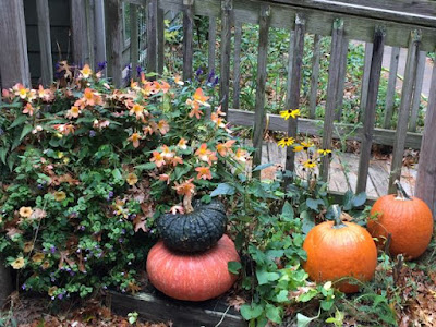 late season flowers surrounding pumpkins and gourds