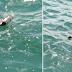 Θεσσαλονίκη: Ο Θερμαϊκός γέμισε με νεκρά ποντίκια (Εικόνες)
