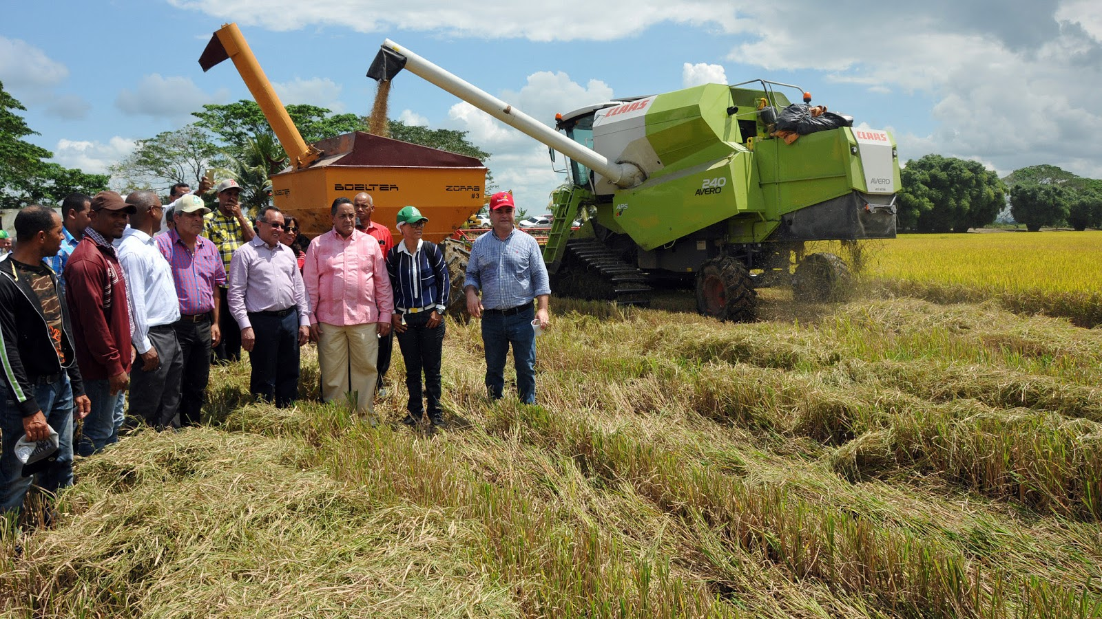 RD marca hito en producción de arroz; se prevé cosecha superior a 11 millones de quintales