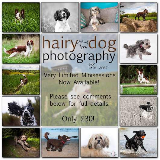 Hairy Dog Photography Minisessions are GO!