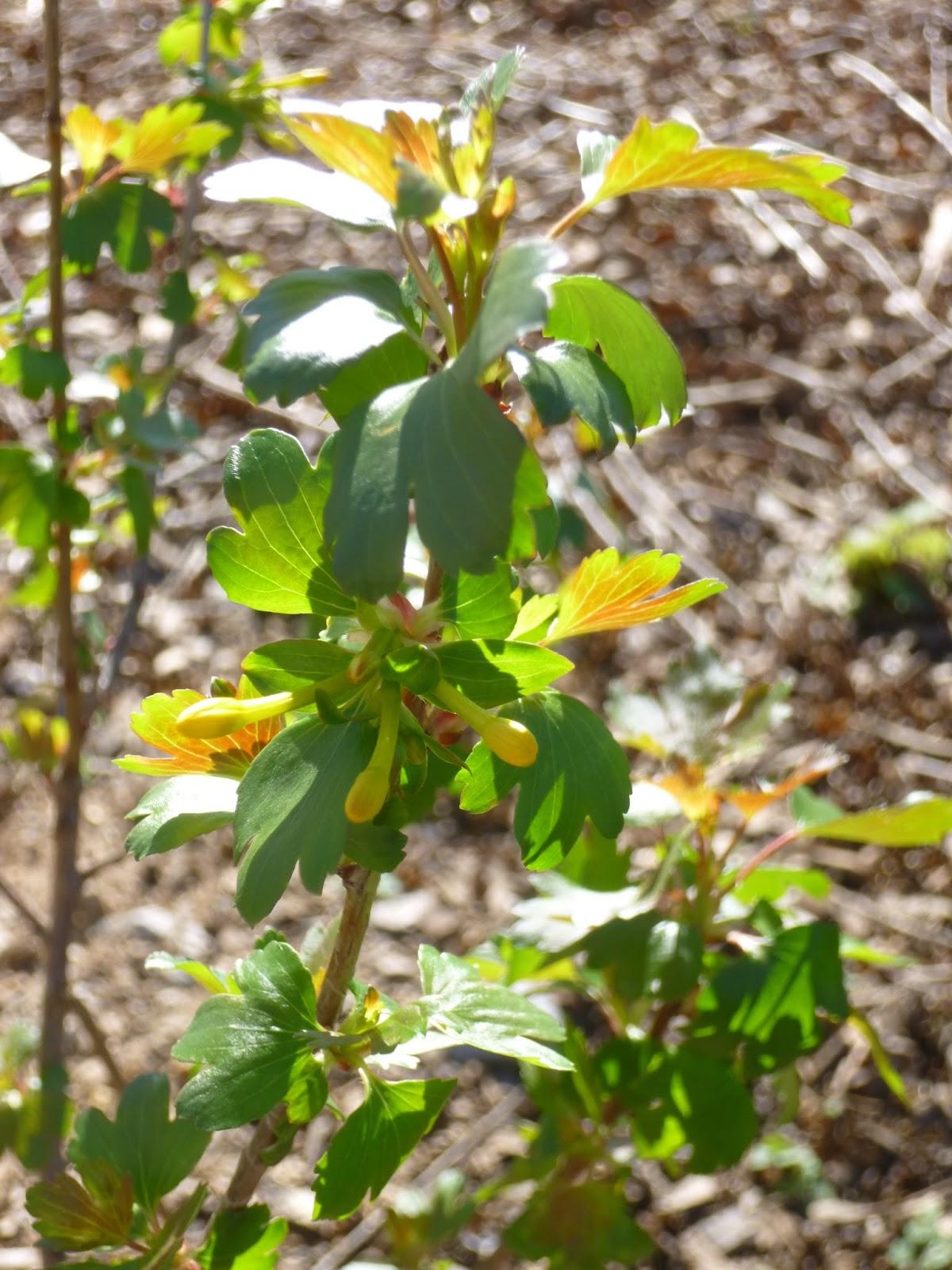 Garden Of Aaron Early Re Leaf