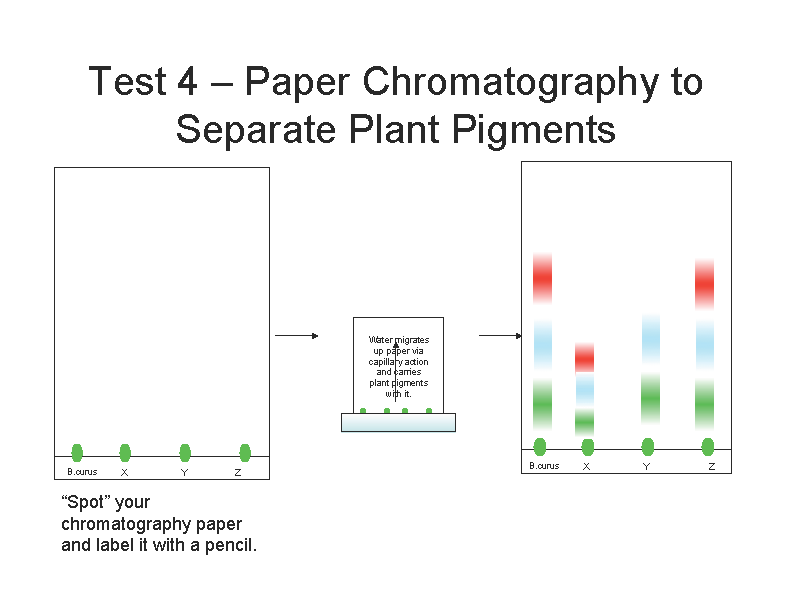 Diagram Of Paper Chromatography Lab Circuit Diagram