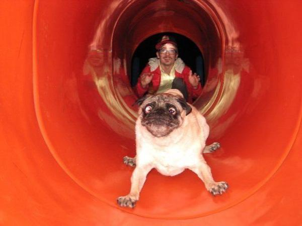 17 chú chó cảm thấy hối hận vì đã trót nghịch dại