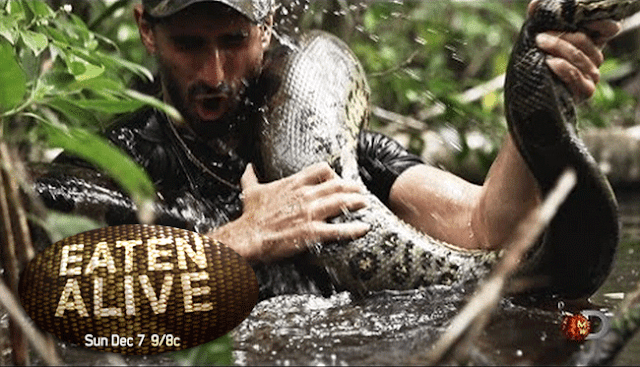 Discovery Channel Accepts the Challenge to be Eaten Alive by an Anaconda