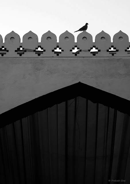 A Black and White Minimal Art Photograph of a Bird Sitting on the Patterned Side Railing of a wall at Diggi Palace Jaipur.