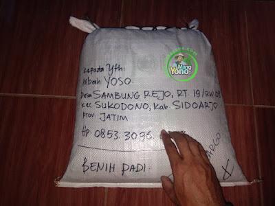 Mbah YOSO Sidoarjo, Jatim  (Sesudah Packing)