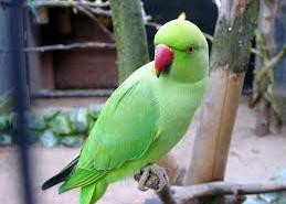 Amazing Facts About Parrot in Hindi