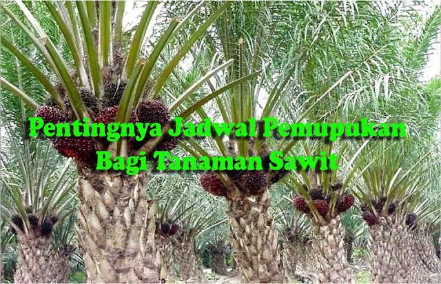 Budidaya kelapa sawit memang mampu menjanjikan kita kaya Pentingnya Menjadwal Pemupukan Kelapa Sawit