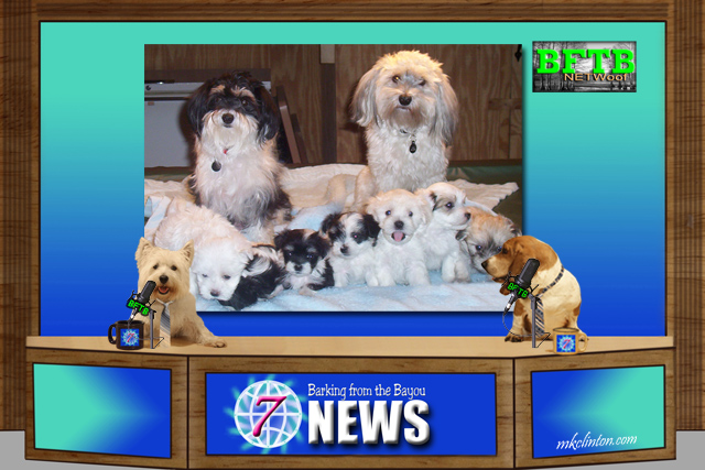 BFTB NETWoof News story on stray dog and puppies