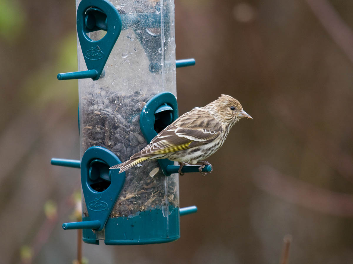 Attract birds to your backyard: Part 3: Styles of bird ...