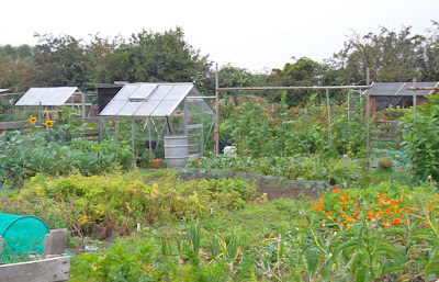 Allotments off Grammar School Road, Brigg - see Nigel Fisher's Brigg Blog