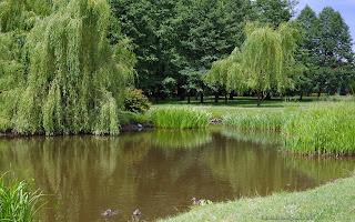 http://fotobabij.blogspot.com/2016/07/bigoraj-park-dworski-wierzba-paczaca.html