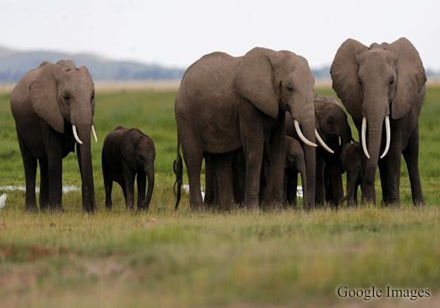 Gajah, Jenis Dan Asal Usul