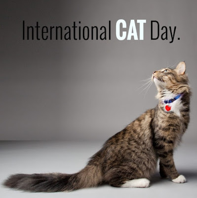 Cat Day Images