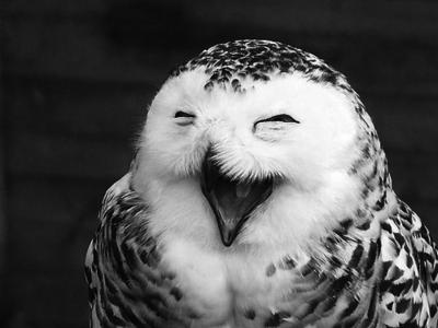 طائر البوم Birds-black-and-white-cute-owl-Favim.com-266346