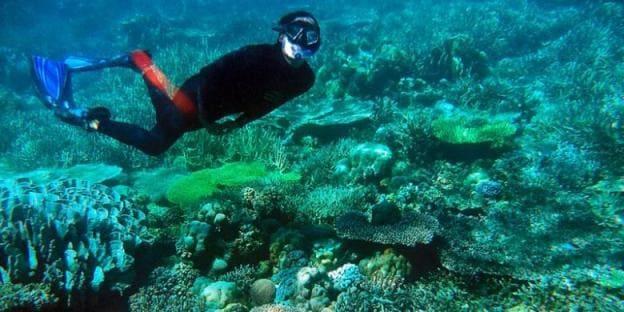 Snorkeling dan Diving Pulau Labengki