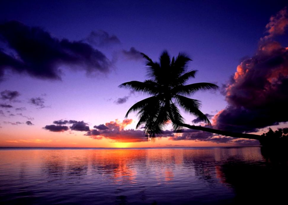 Tropical Sunset Wallpaper | Zoom Wallpapers