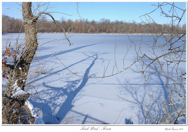 Fresh Pond: Frozen