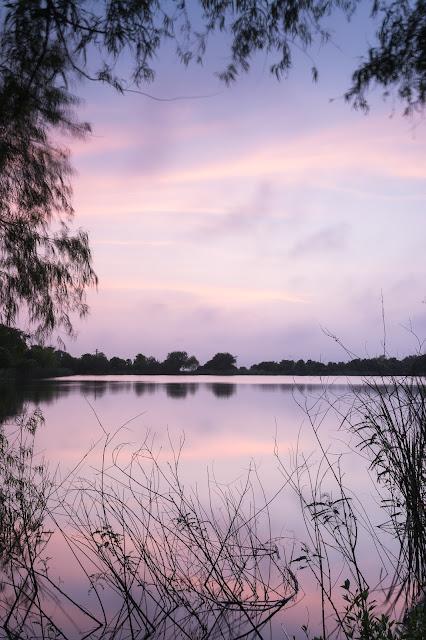 Twilight, Smith Oaks Sanctuary