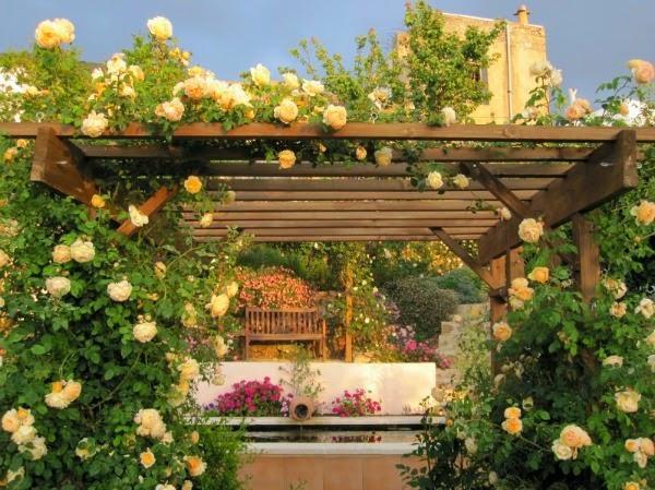 10 plantas trepadoras para cubrir prgolas o cenadores Guia de jardin