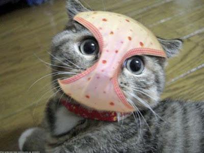 Lustiger Katzen Blick in Kamera - Große Augen, Schlüpfer im Gesicht