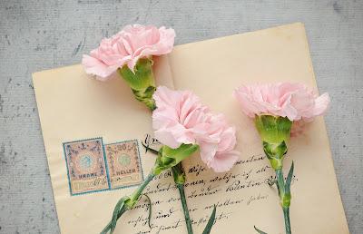 Sobre franqueado y claveles rosas