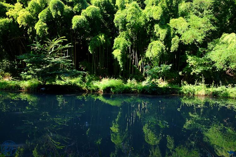 Le Chameau Bleu - Blog Voyage Canal des deux mers à Velo  - Foret de Bambou  Lot et Garonne