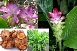 obat kolesterol tradisional alami herbal menurunkan kolesterol